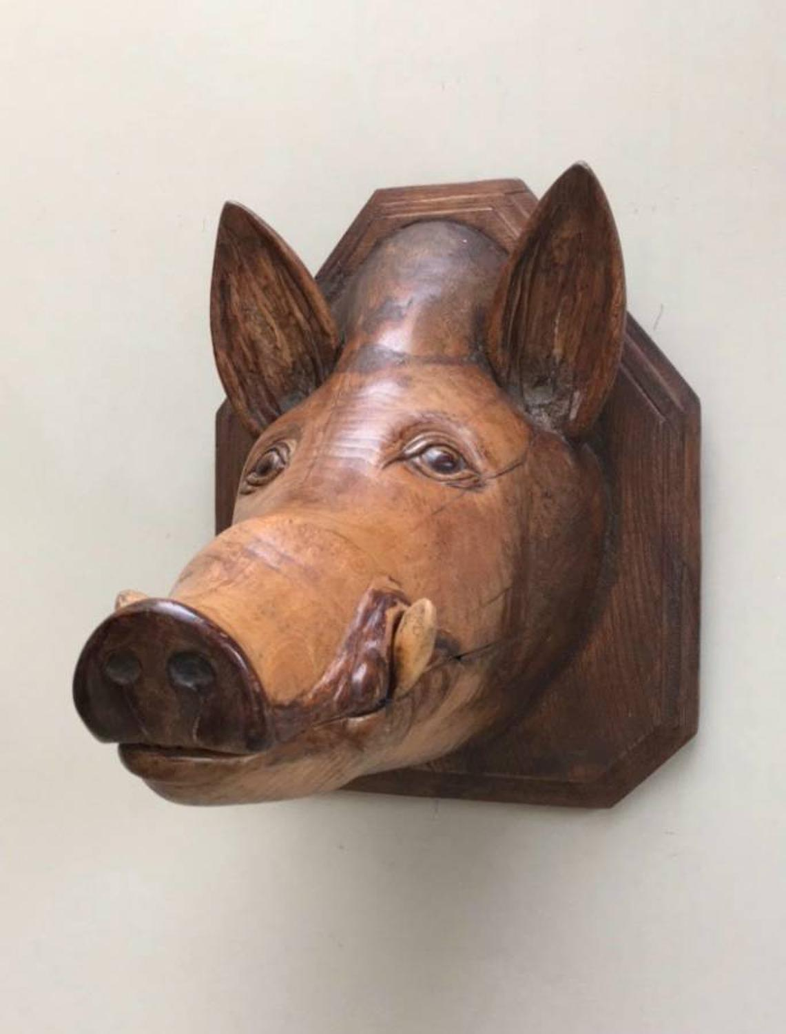 Exceptional Victorian Carved Elm Butchers Wall Hung Boar`s Head