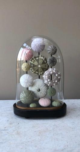Victorian Glass Dome with Beautiful Display of Sea Urchins