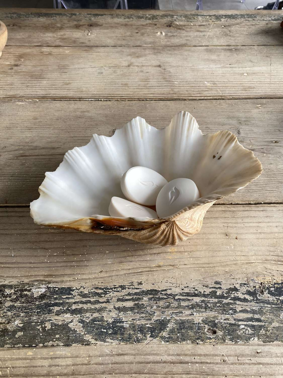 Good Size Antique Clam Shell